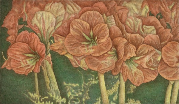 Geraniums Up Close sm paper print