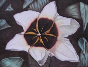 Star Magnolia - 9 x 12 - $25